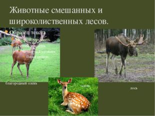 Животные смешанных и широколиственных лесов. благородный олень лось олень