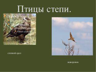 Птицы степи. степной орел жаворонок