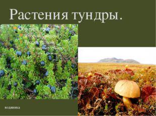 Растения тундры. водяника