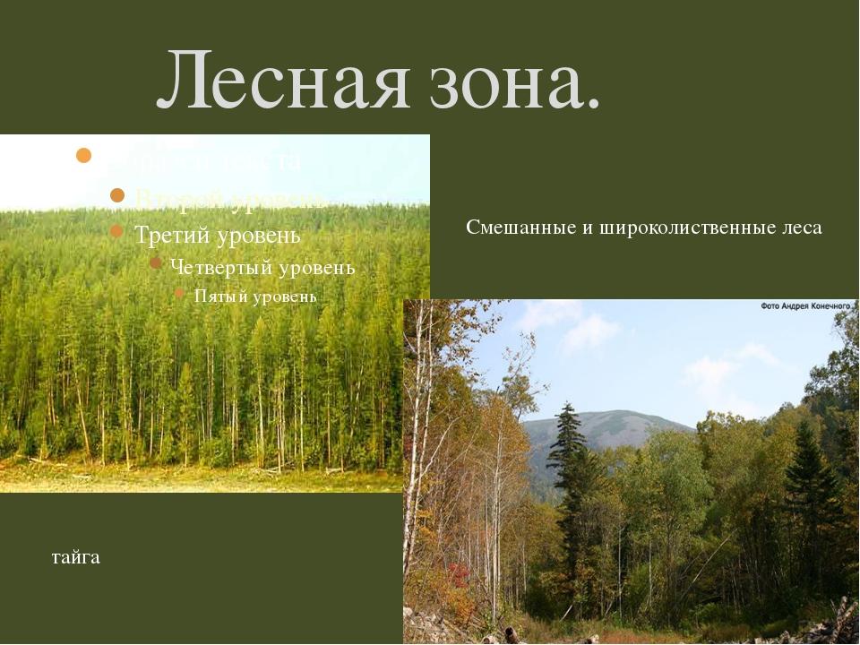 Лесная зона. тайга Смешанные и широколиственные леса