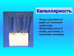 Капиллярность Вода поднимается вверх (в тоненьких трубочках). Капилляры есть