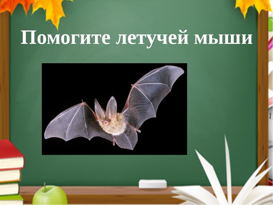Помогите летучей мыши Читают правило и помогают мыши сделать правильный выбор...