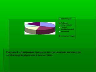 Рисунок 6: «Диаграмма процентного соотношения количества особей видов деревье