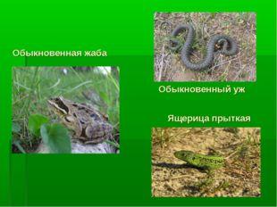 Обыкновенная жаба Ящерица прыткая Обыкновенный уж