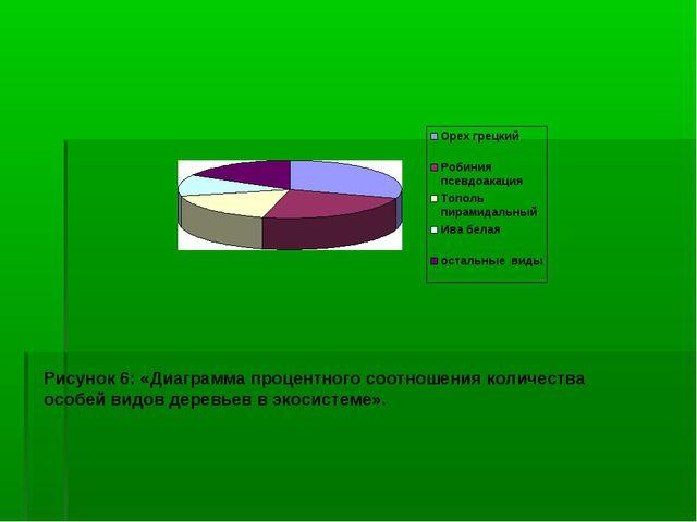 Рисунок 6: «Диаграмма процентного соотношения количества особей видов деревье...