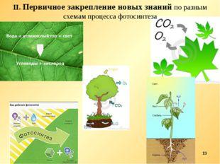 * II. Первичное закрепление новых знаний по разным схемам процесса фотосинтеза