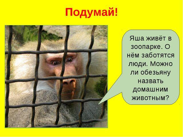 Подумай! Яша живёт в зоопарке. О нём заботятся люди. Можно ли обезьяну назват...