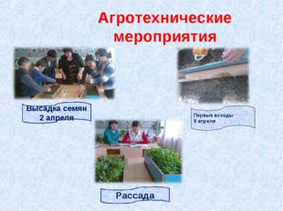 Агротехнические мероприятия Высадка семян 2 апреля Рассада Первые всходы 9 ап