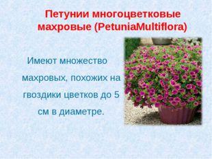 Петунии многоцветковые махровые (PetuniaMultiflora) Имеют множество махровых