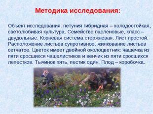 Методика исследования: Объект исследования: петуния гибридная – холодостойкая