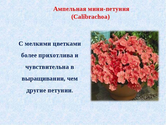 С мелкими цветками более прихотлива и чувствительна в выращивании, чем другие...