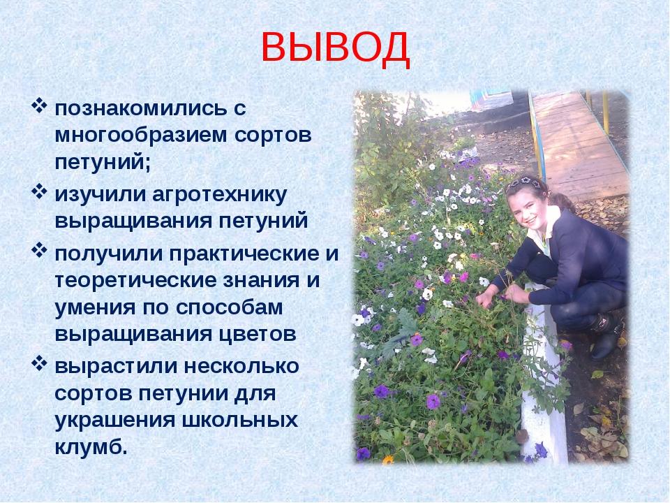 ВЫВОД познакомились с многообразием сортов петуний; изучили агротехнику выращ...