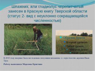 Шпажник, или гладиолус черепитчатый занесен в Красную книгу Тверской области