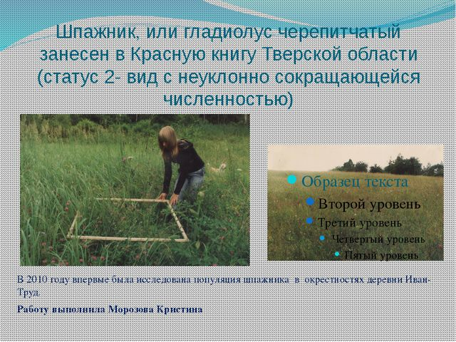 Шпажник, или гладиолус черепитчатый занесен в Красную книгу Тверской области...
