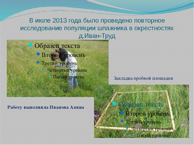 В июле 2013 года было проведено повторное исследование популяции шпажника в о...