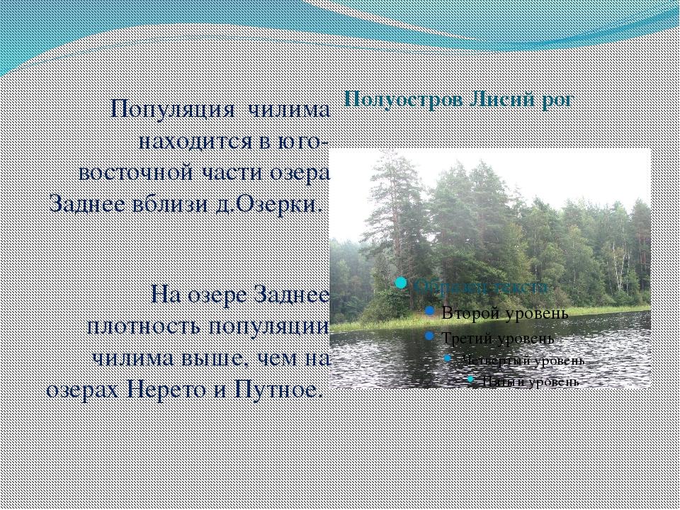 Полуостров Лисий рог Популяция чилима находится в юго-восточной части озера З...