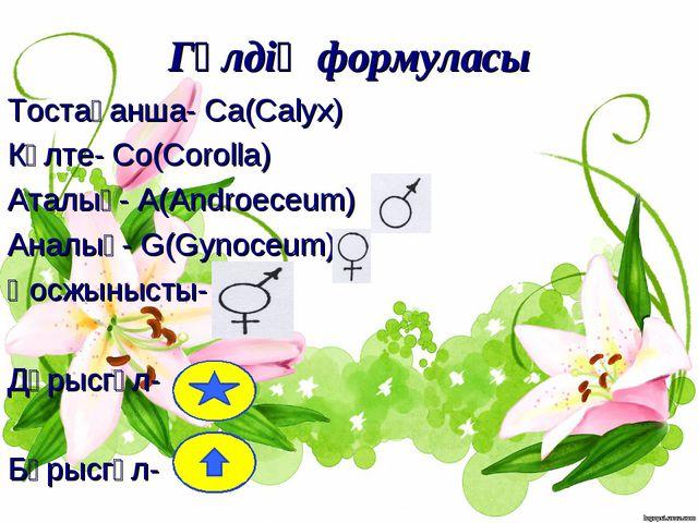 Гүлдің формуласы Тостағанша- Ca(Calyx) Күлте- Co(Corolla) Аталық- A(Androeceu...