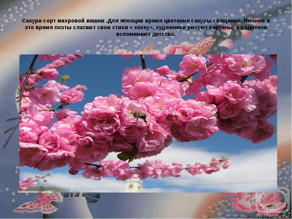 Сакура-сорт махровой вишни .Для японцев время цветения сакуры священно. Имен...