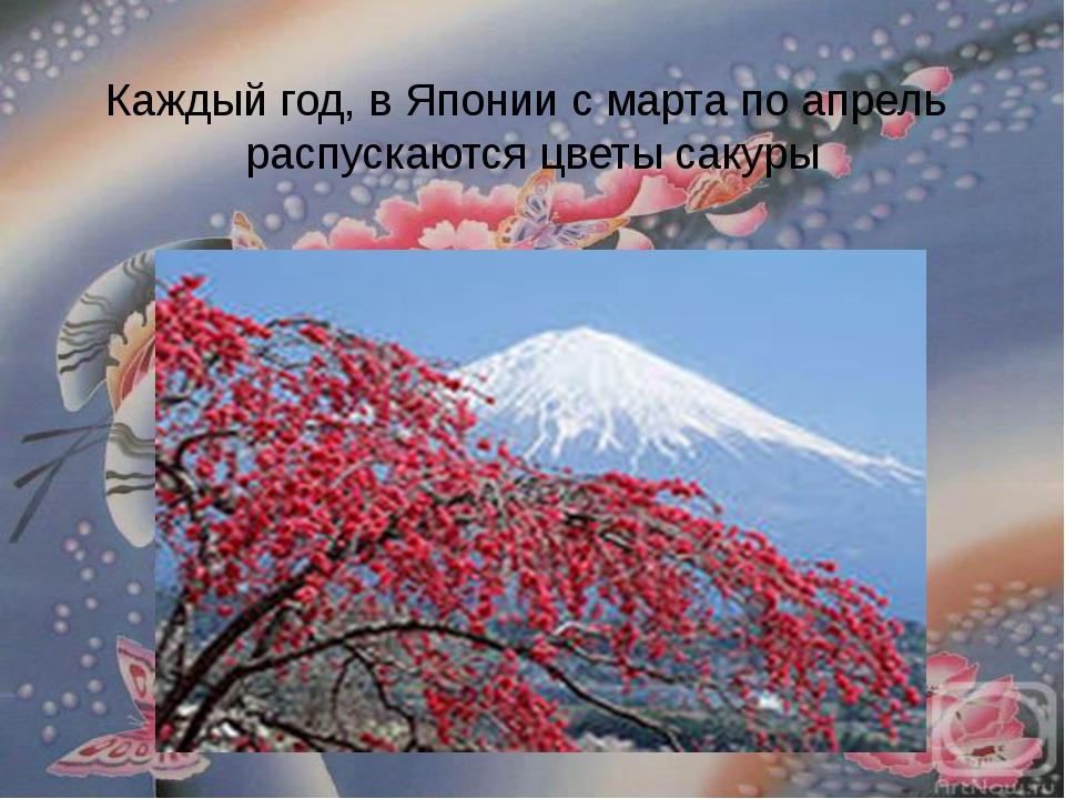 Каждый год, в Японии с марта по апрель распускаются цветы сакуры