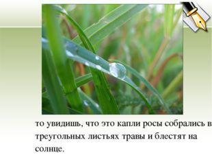то увидишь, что это капли росы собрались в треугольных листьях травы и блестя