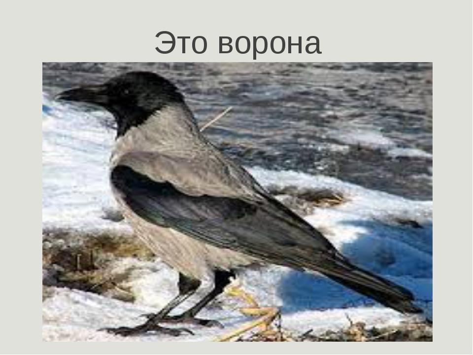 Это ворона