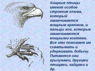 Хищные птицы имеют особое строение клюва, который заканчивается мощным крючк