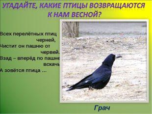 Всех перелётных птиц черней, Чистит он пашню от червей. Взад – вперёд по пашн