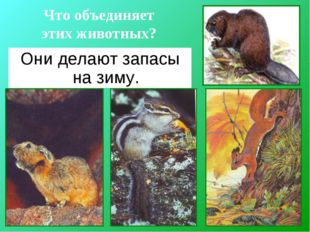 Что объединяет этих животных? Они делают запасы на зиму.