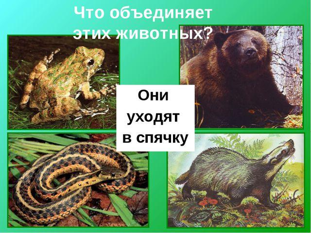 Они уходят в спячку Что объединяет этих животных?