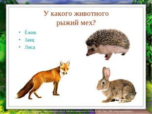 У какого животного рыжий мех? Ёжик Заяц Лиса Лазарева Лидия Андреевна, учител