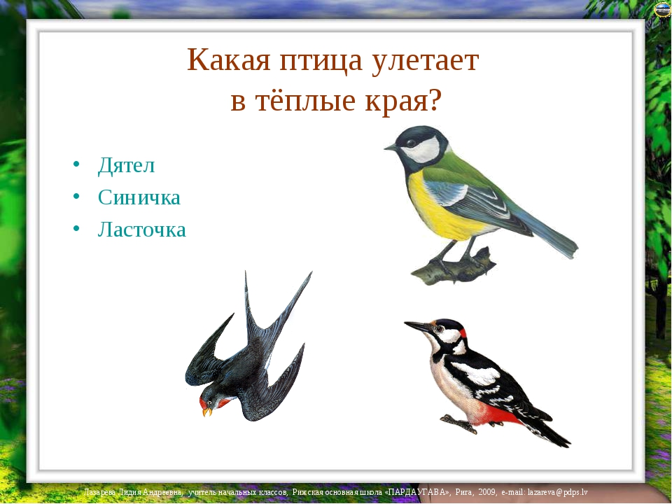 Какая птица улетает в тёплые края? Дятел Синичка Ласточка Лазарева Лидия Андр...