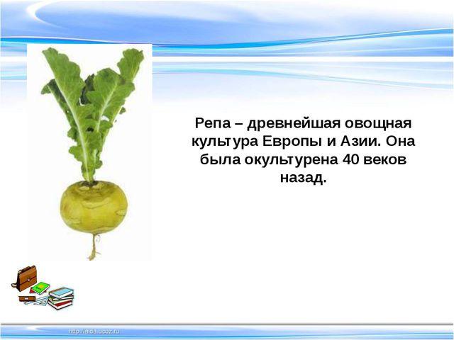 Репа – древнейшая овощная культура Европы и Азии. Она была окультурена 40 ве...