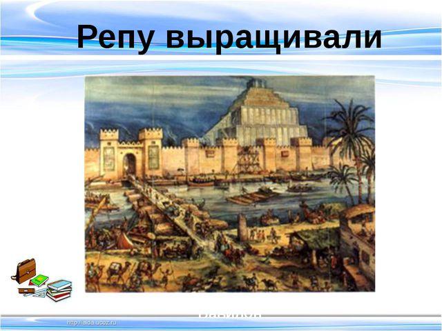 Репу выращивали Вавилон