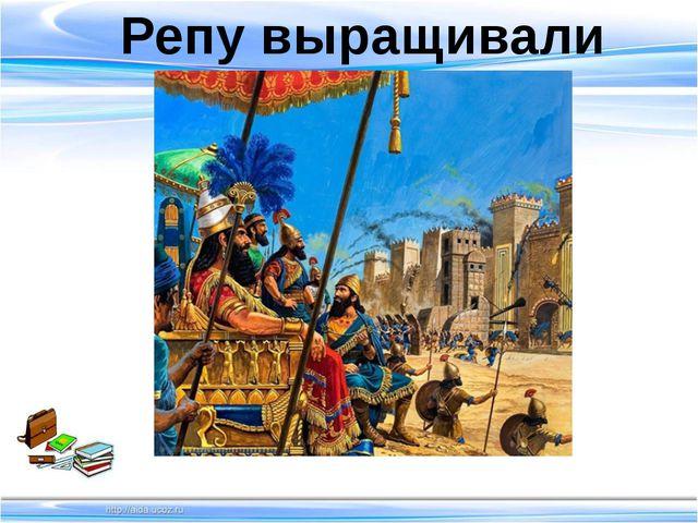 Репу выращивали Ассирия