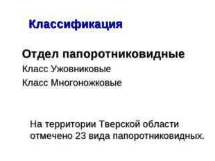 Классификация Отдел папоротниковидные Класс Ужовниковые Класс Многоножковые