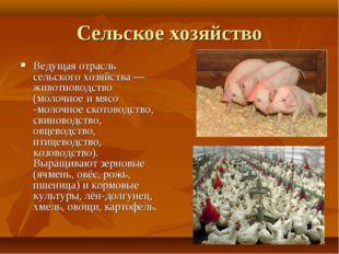 Сельское хозяйство Ведущая отрасль сельского хозяйства—животноводство (молоч