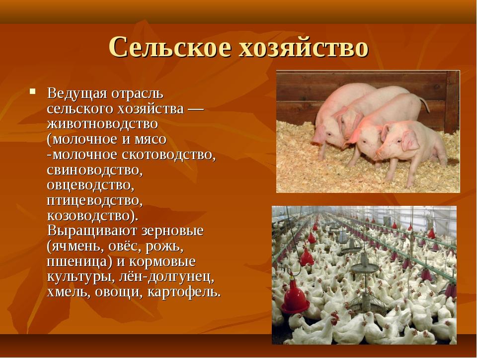 Сельское хозяйство Ведущая отрасль сельского хозяйства—животноводство (молоч...