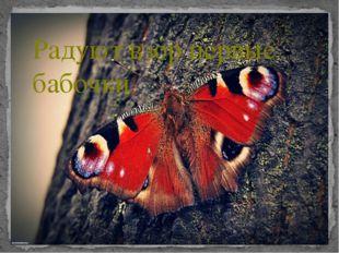 Радуют взор первые бабочки
