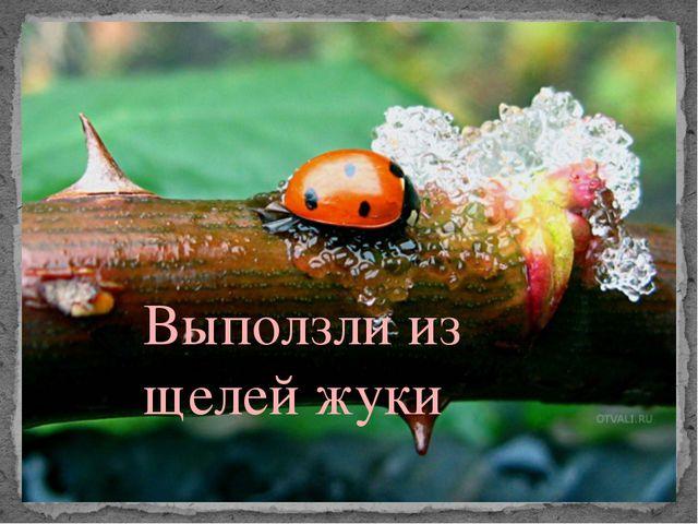 Выползли из щелей жуки