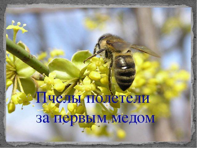 Пчелы полетели за первым медом