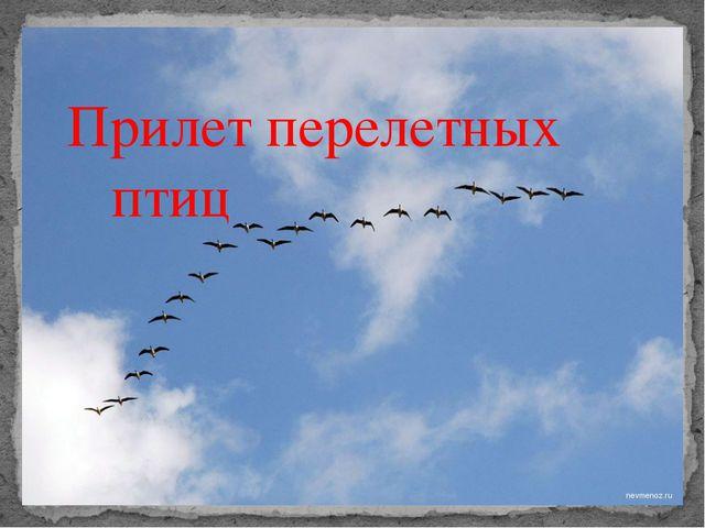 Прилет перелетных птиц