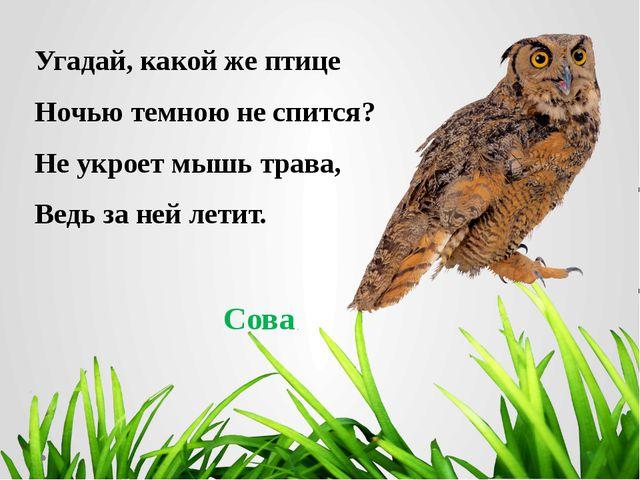 Угадай, какой же птице Ночью темною не спится? Не укроет мышь трава, Ведь за...