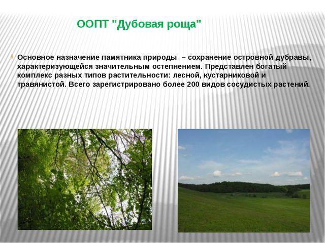 """ООПТ """"Дубовая роща"""" Основное назначение памятника природы – сохранение остров..."""