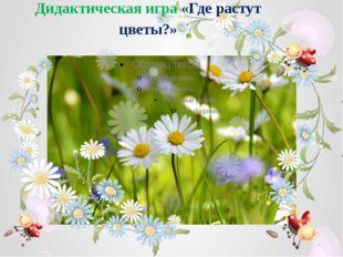 Дидактическая игра «Где растут цветы?»
