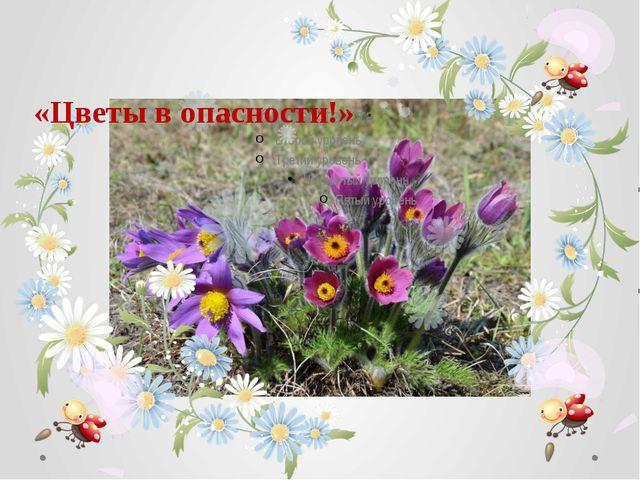 «Цветы в опасности!»