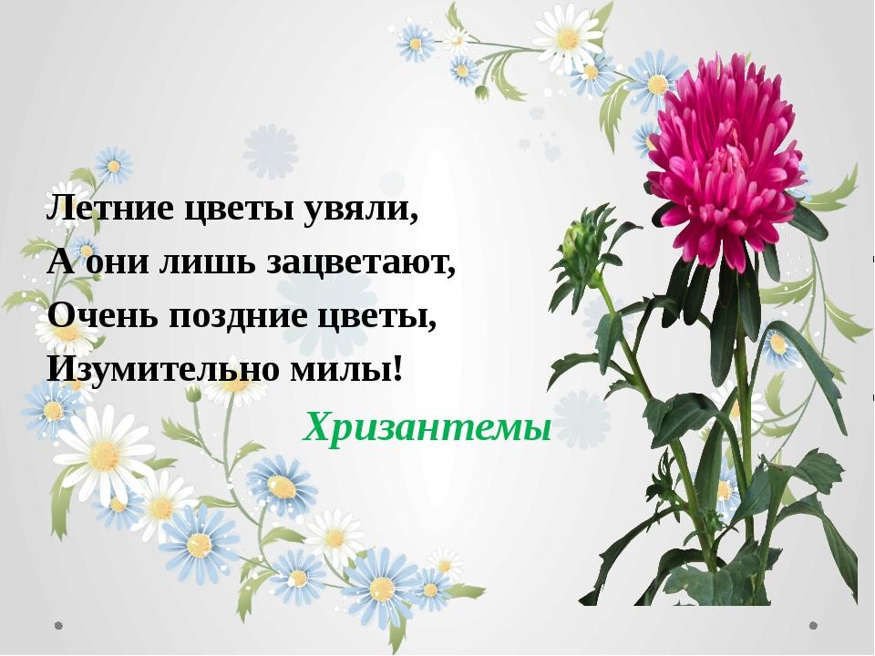 Летние цветы увяли, А они лишь зацветают, Очень поздние цветы, Изумительно м...