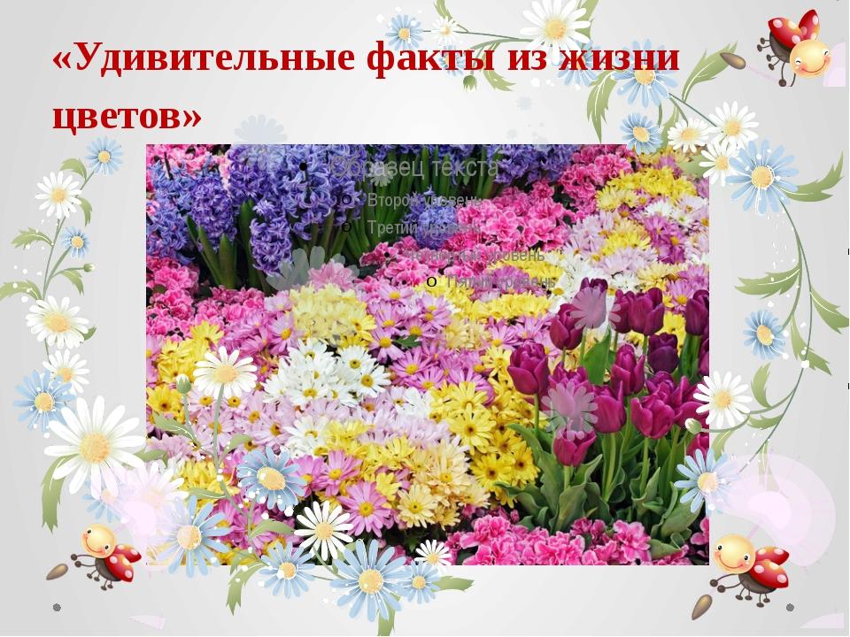 «Удивительные факты из жизни цветов»