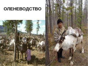 ОЛЕНЕВОДСТВО