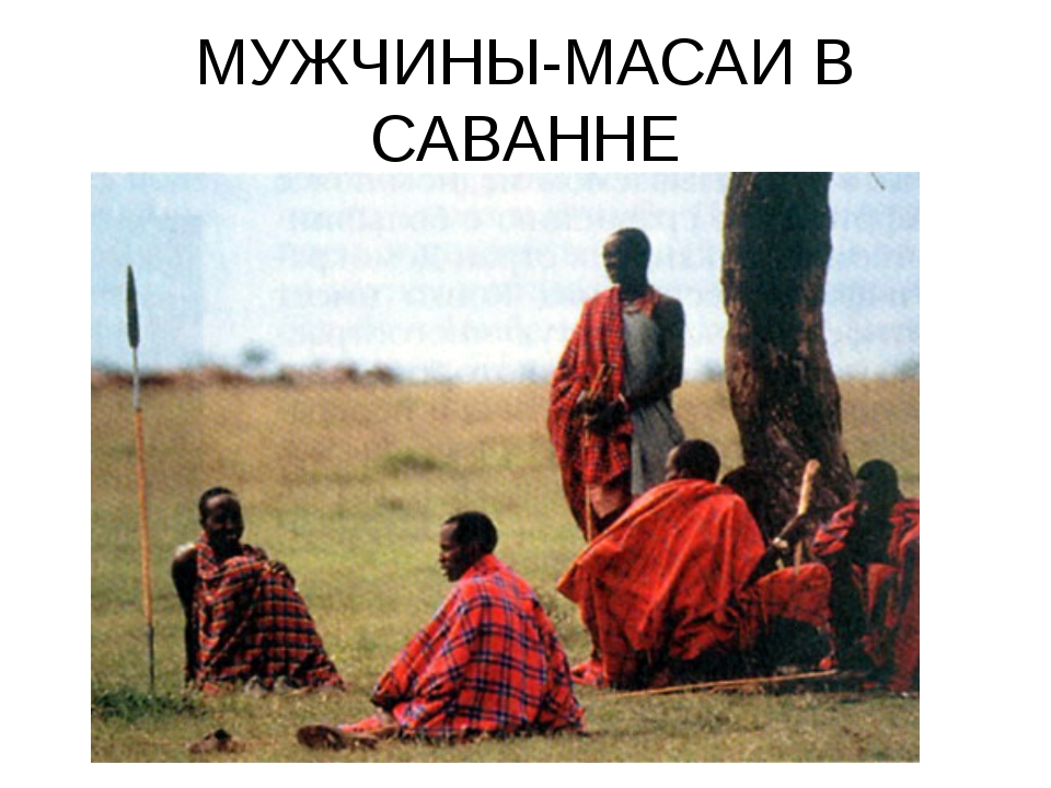 МУЖЧИНЫ-МАСАИ В САВАННЕ