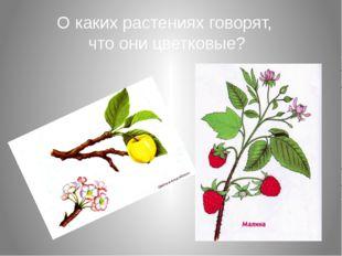 О каких растениях говорят, что они цветковые?